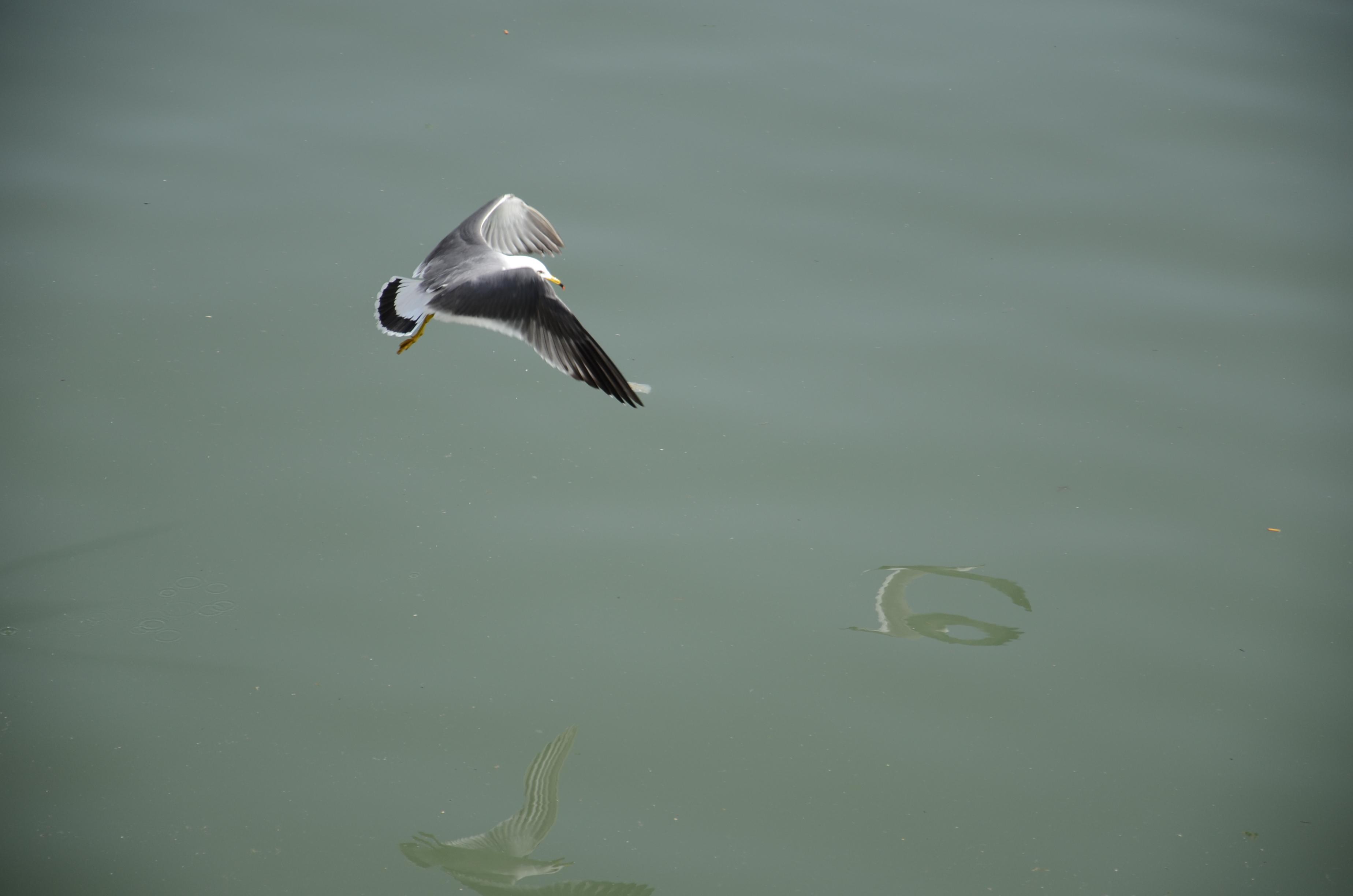 看看这水,小时候它们可都是清澈见底啊