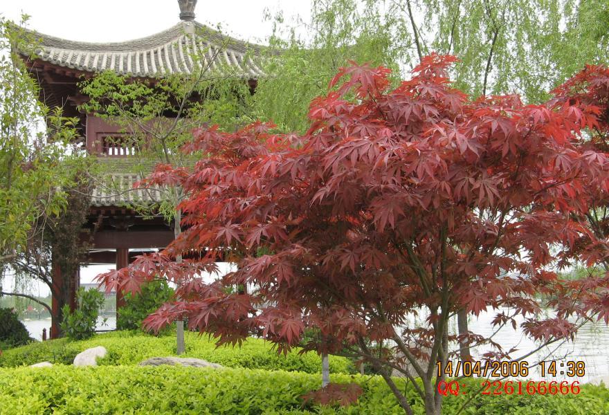 美丽的 xi'an Tang Paradise Tourism