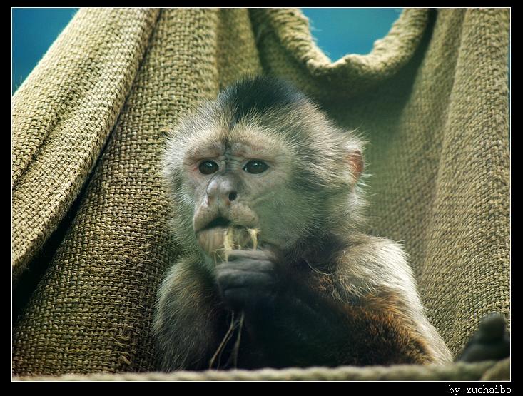 动物园里还有猴子