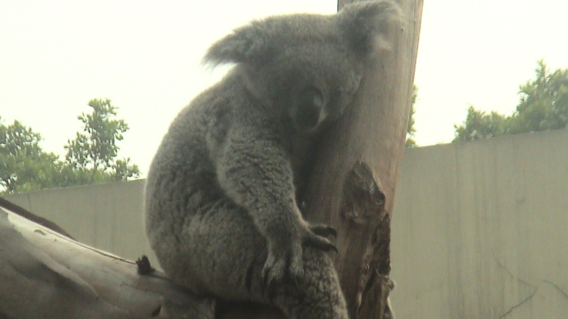 广州香江野生动物园游记