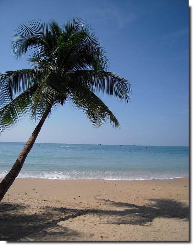 阳光海滩椰子树-快乐数码摄影 - chinaunix.net - 版