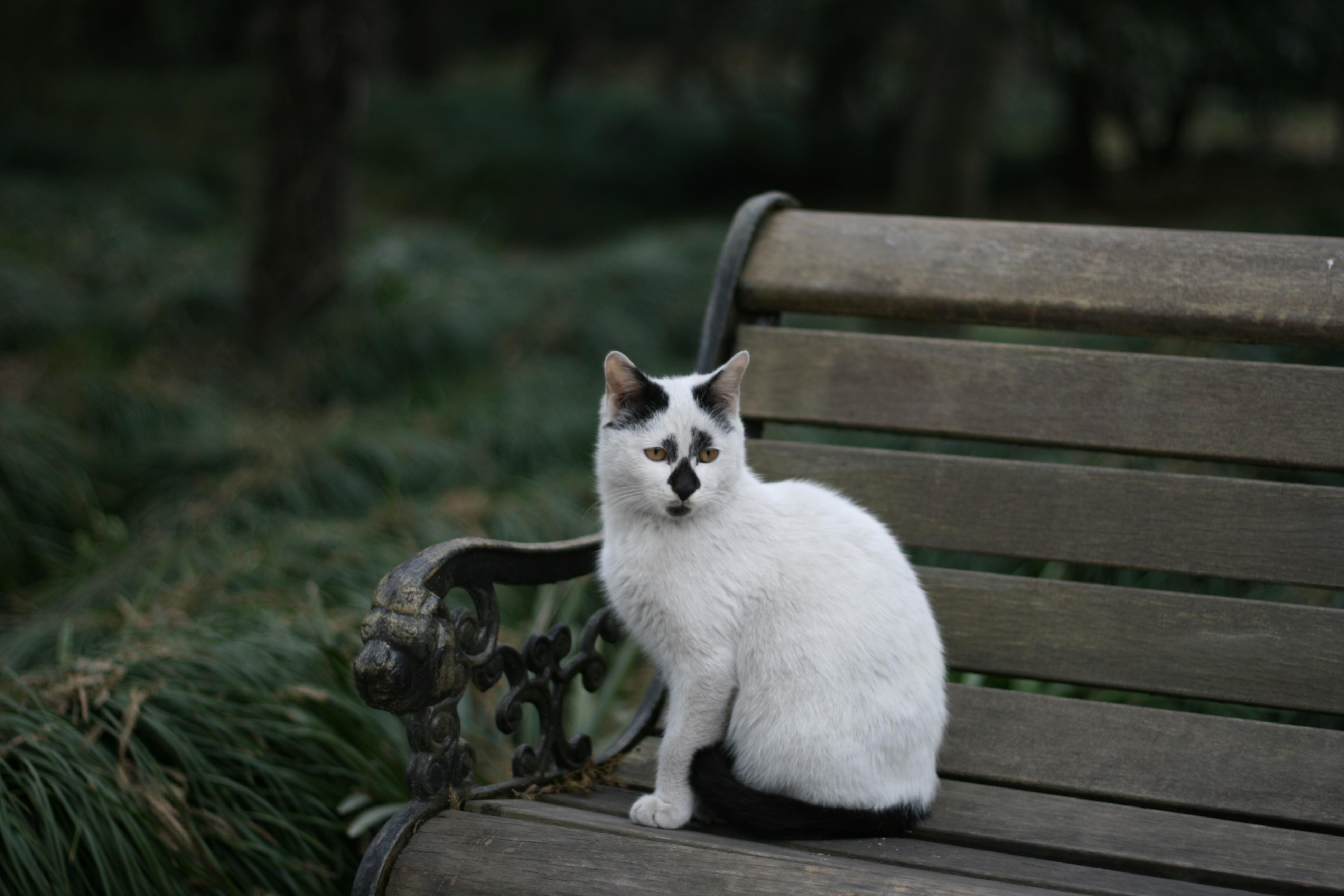 上海植物园--可爱的猫咪(在流浪的旅途)