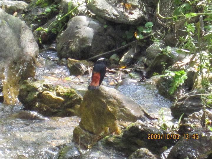 不知明的鸟,在孤独的叫。