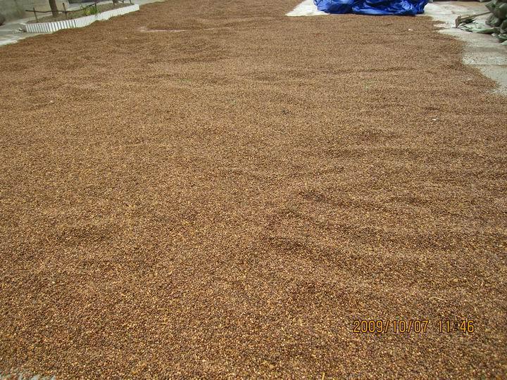 同时看到过这么大片的松籽吗。