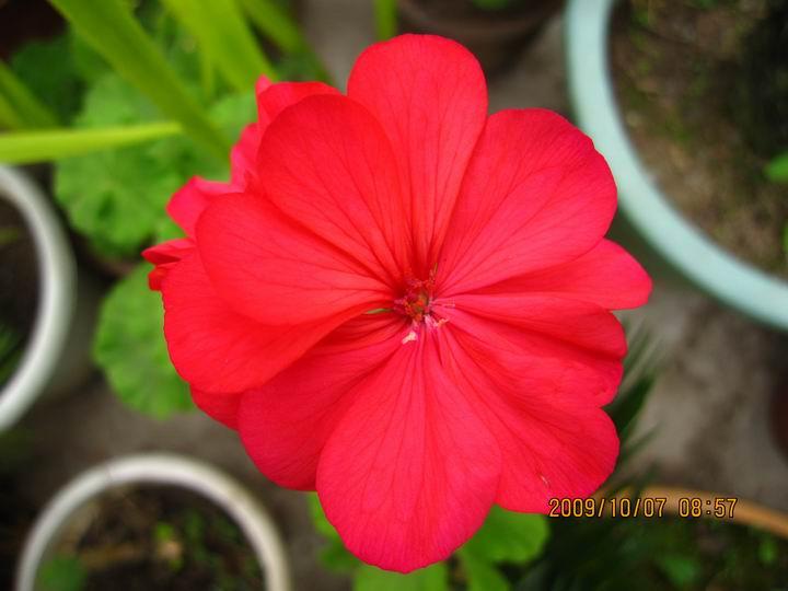 温室的花朵。