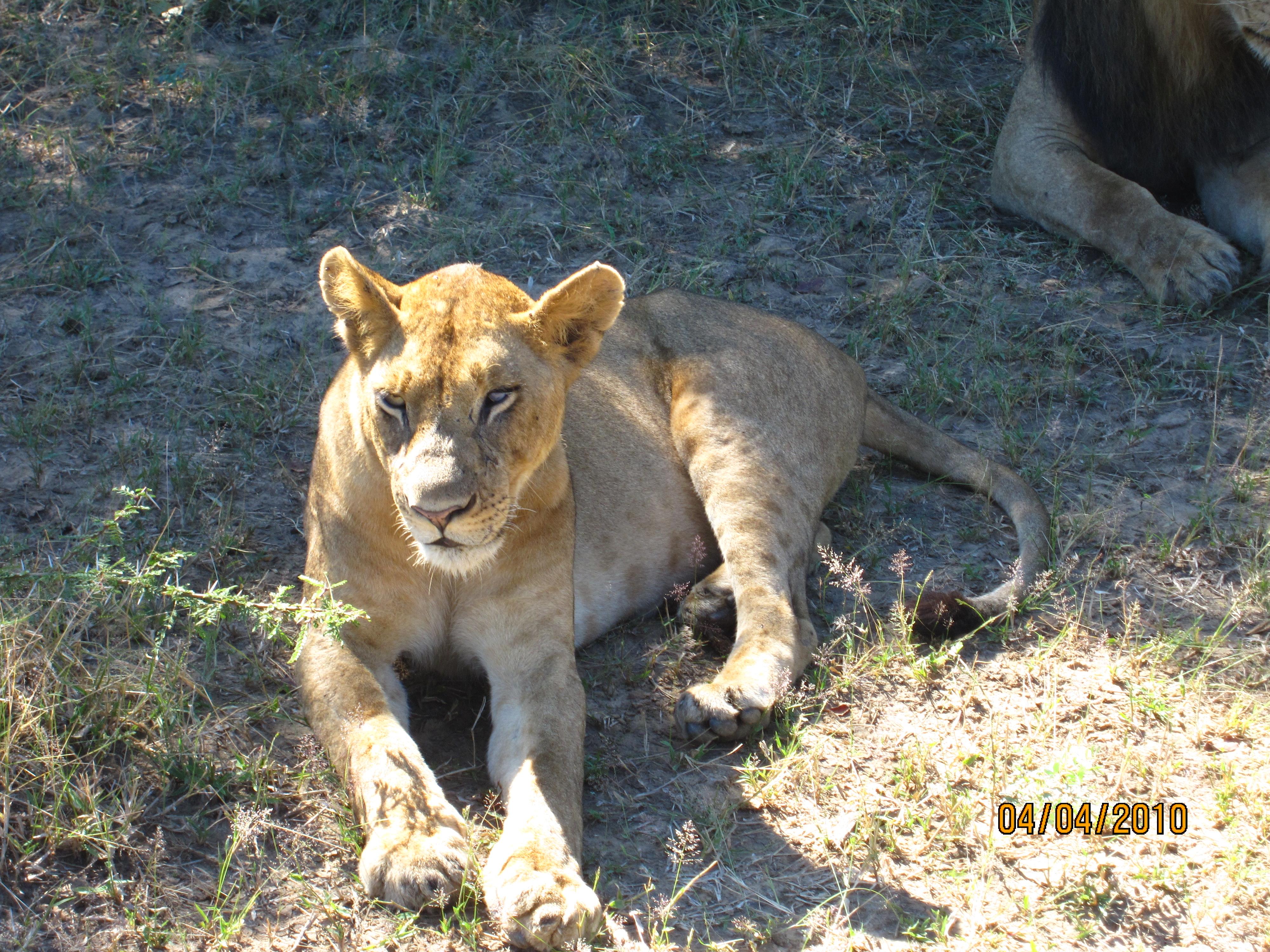 非洲野生动物园拍摄