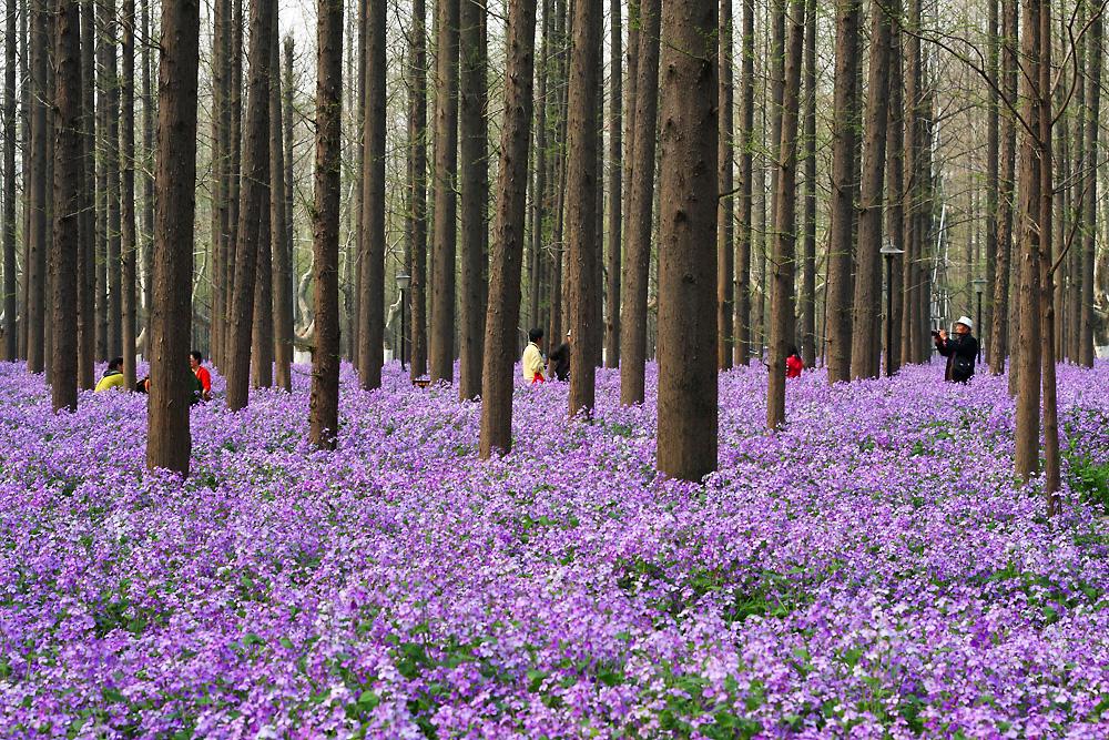 春天开的花名称图片;