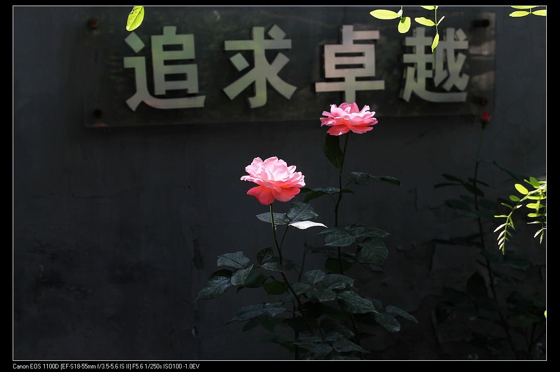 IMG_0483.jpg